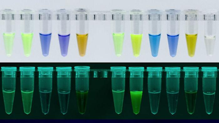 proteines fluorescentes meduses