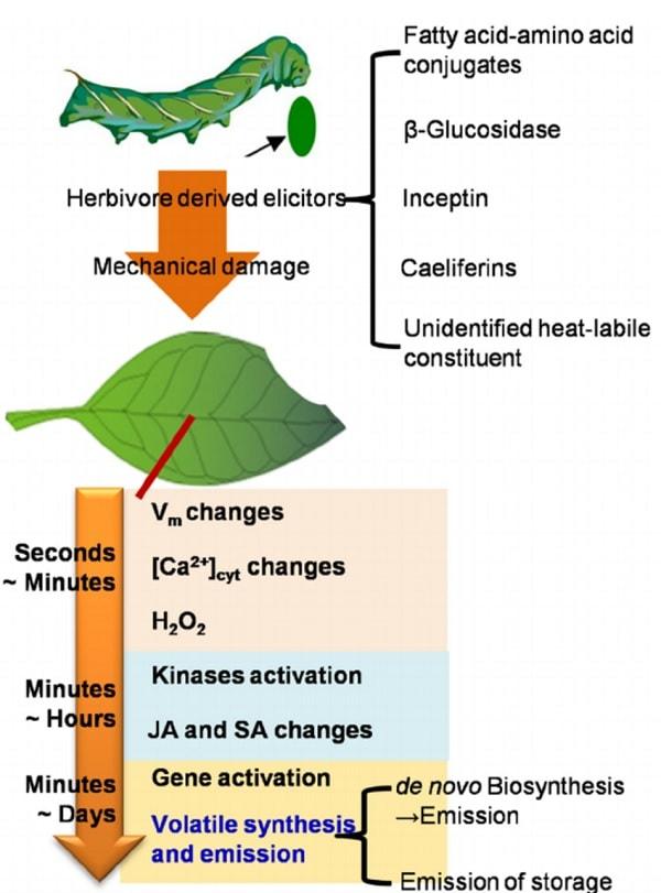 reactions plante