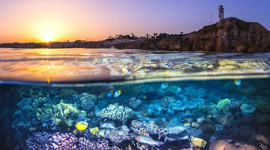 recifs coralliens raisons supplementaires destruction