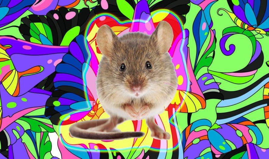 souris hallucinations avec signaux lumineux