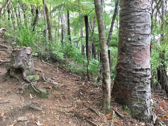 arbre foret superorganisme