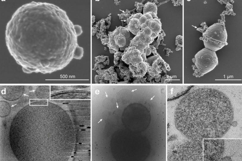 microbe evolution