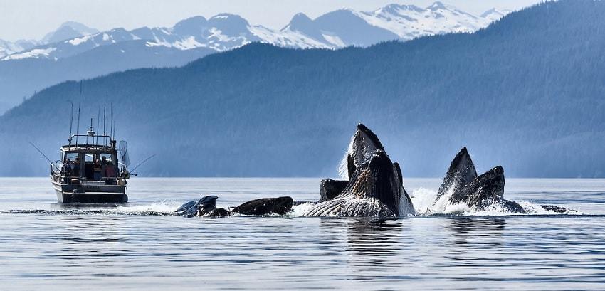 bateau baleine
