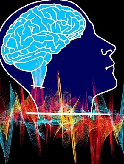 comment souvenirs sont encodes groupes neurones