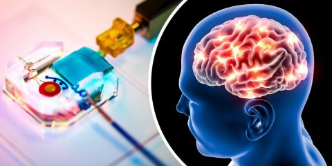 dispositif manipulation cellules cerebrales sans fil