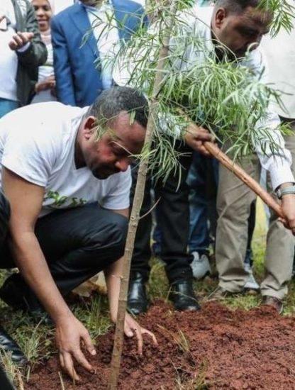 ethiopie arbres