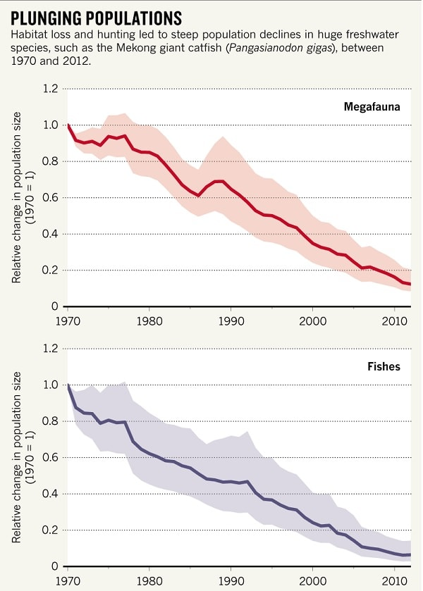 graphe population megafaune