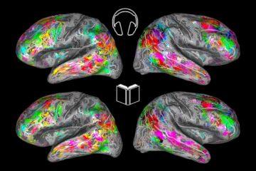 imagerie cerveau prediction lecture similarite ecoute