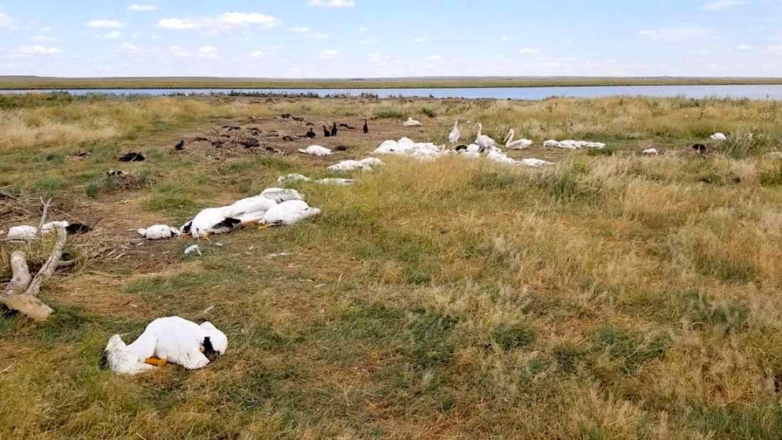 oiseaux aquatiques morts tempete grele montana