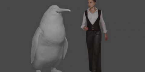 pingouin nouvelle zelande taille humaine