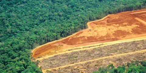 record deforestation amazonie juillet 2019