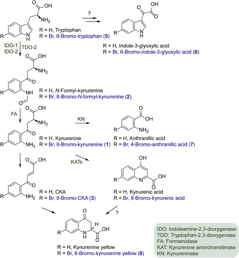 synthese metabolites