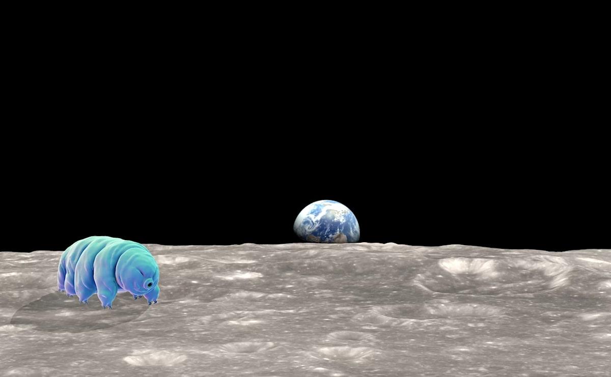 tardigrades sur lune beresheet crash