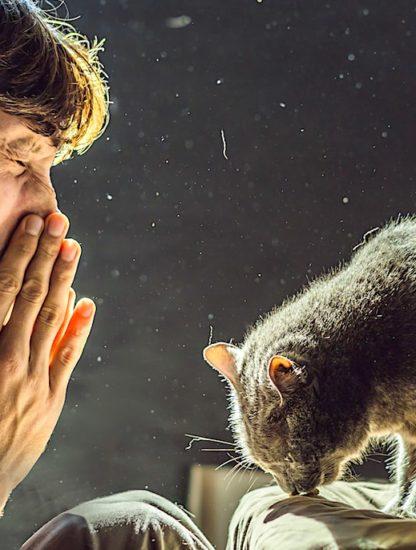 vaccin contre allergies aux chats