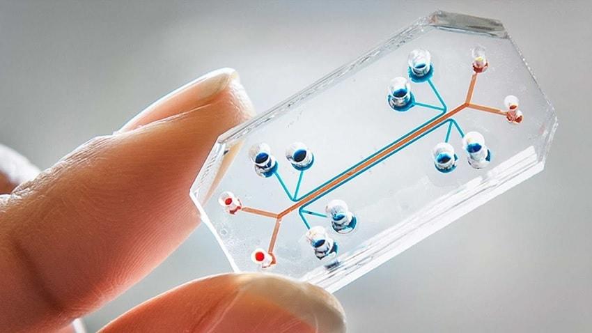 cellules artificielles