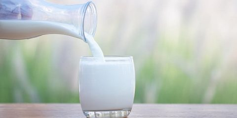 consommation lait