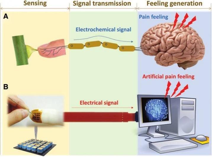 dispositif peau electronique