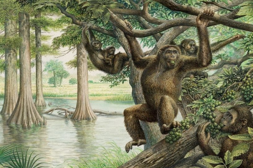 fossile rudapithecus