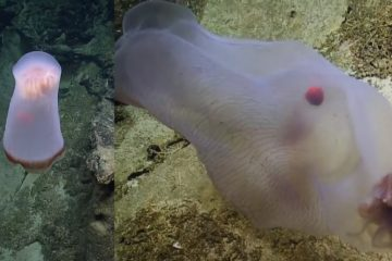 creature fonds marins meduse transformation metamorphose