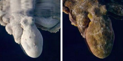 pieuvre sommeil