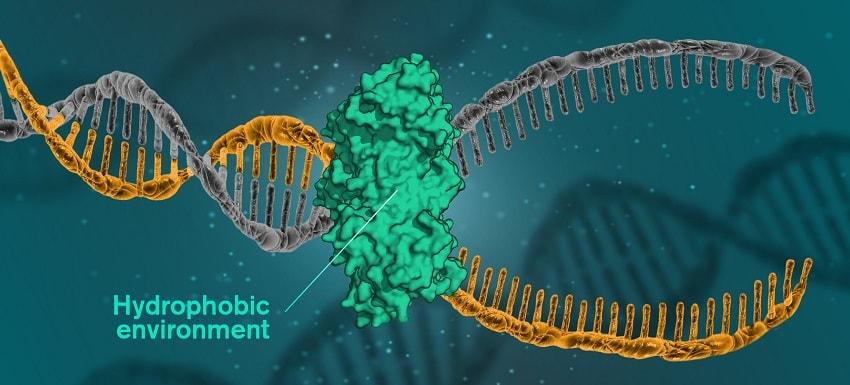 proteine hydrophobe