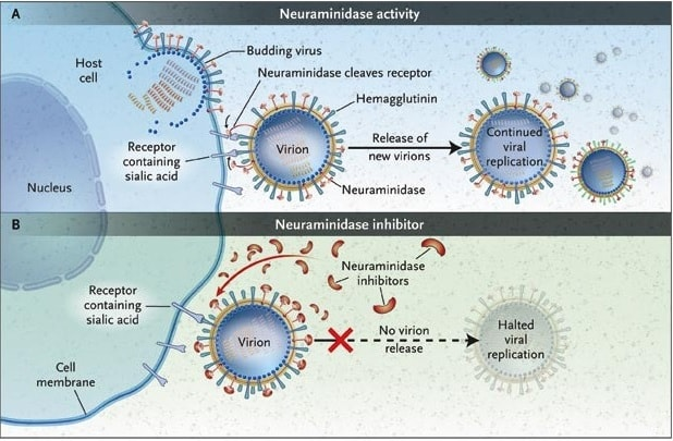 action olseltamivir