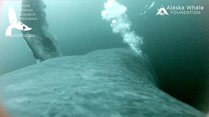 camera baleine
