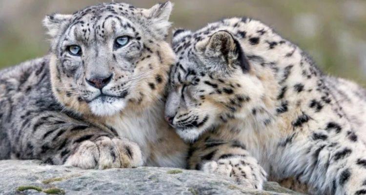 diversite genetique animale