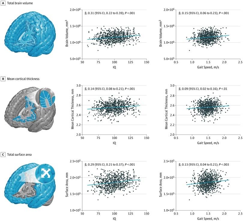 graphiques declin cerveau