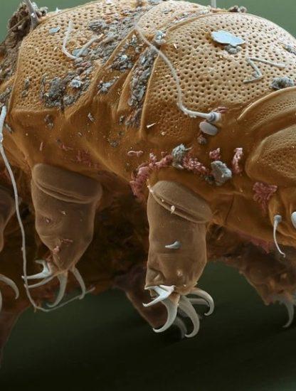 tardigrades protection