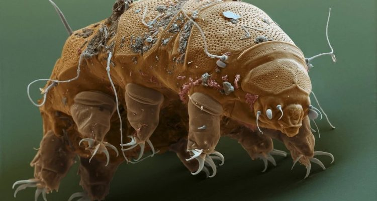 tardigrades protection