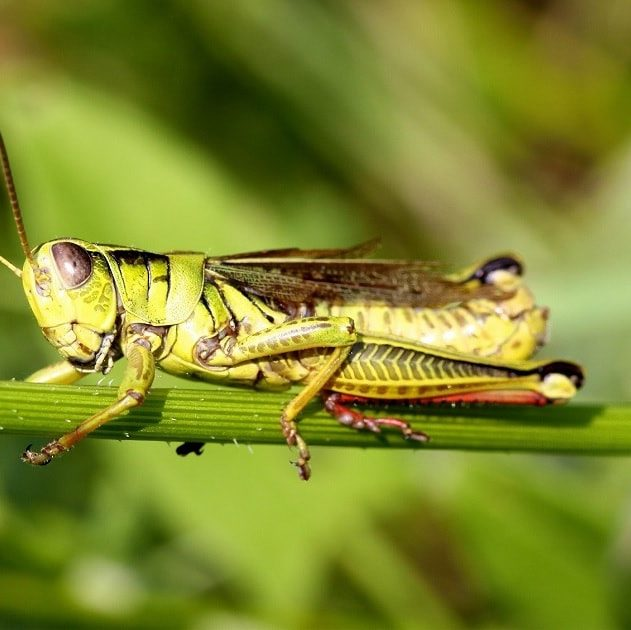 declin insectes