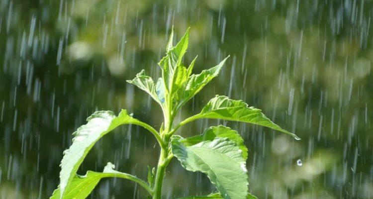 eau vegetaux