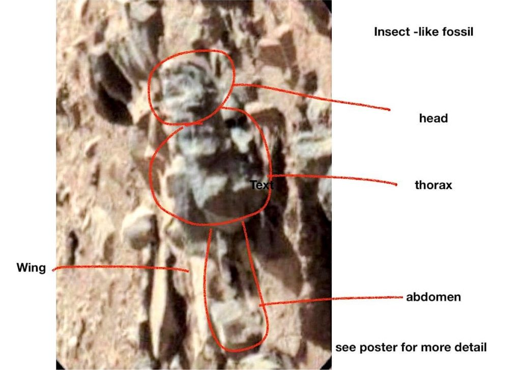 fossile forme insecte mars vie extraterrestre romoser