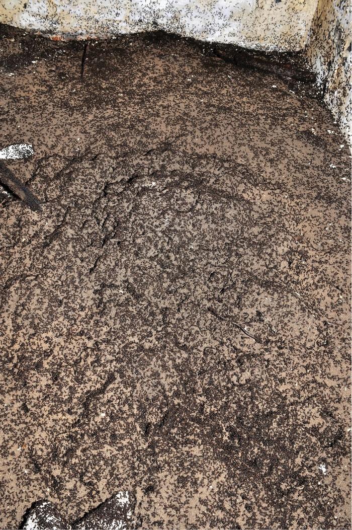 fourmis bunker soviétique survie cannibalisme