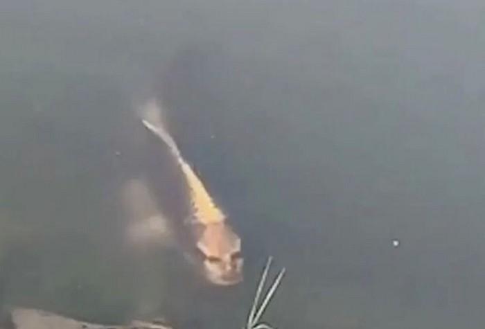 Un poisson à visage humain repéré dans un lac en Chine — Terrifiant