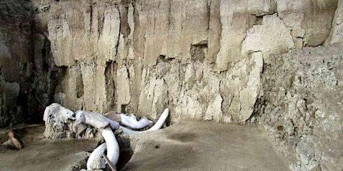 restes 14 mammouths decouverts mexique