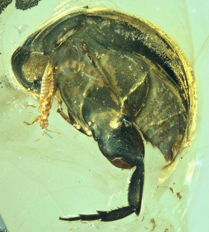 insecte pollen fossile pollinisation fleurs