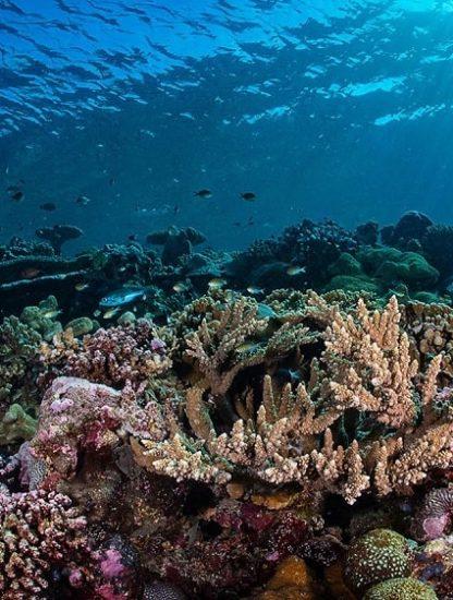acidification oceans