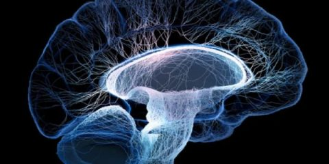 cerveau comportement