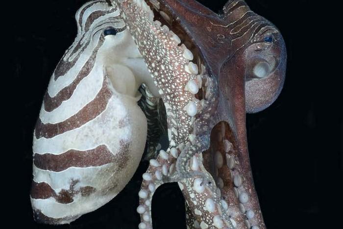 comportement social pieuvre animaux marins