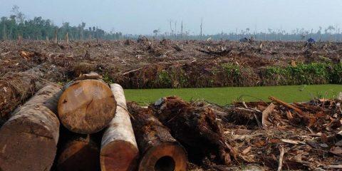 deforestation brezil amazonie foret amazonienne bois