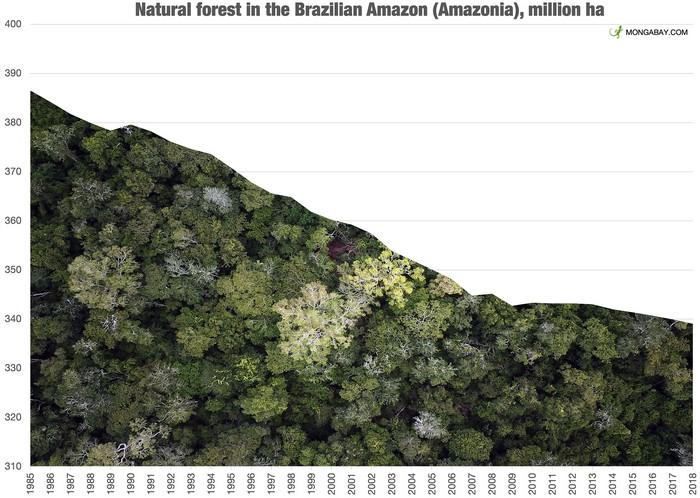 deforestation brezil