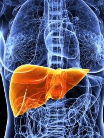 foie bioimpression organe humain fonctionnel