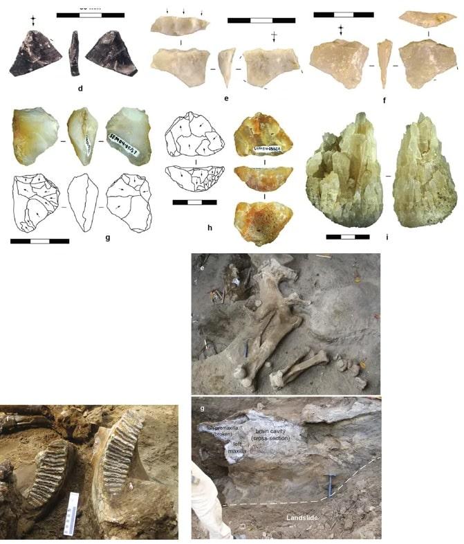 fossiles java