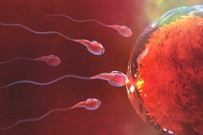 greffe moelle osseuse sperme donneur