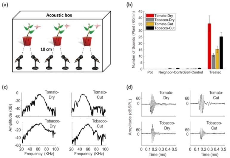 protocole sons plantes