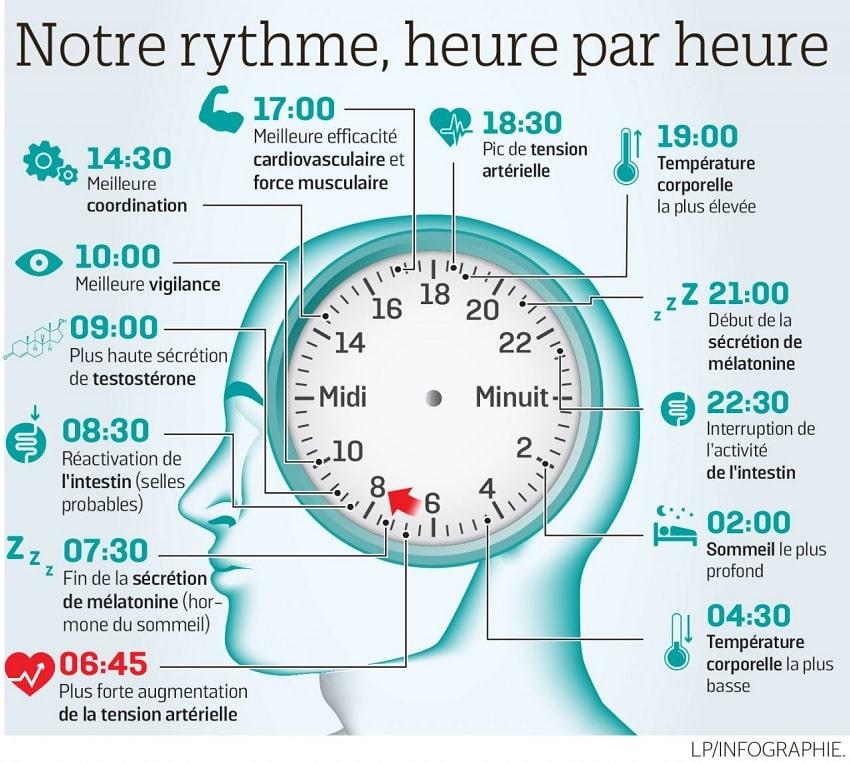 rythme circadien