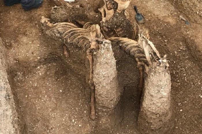 squelettes chevaux