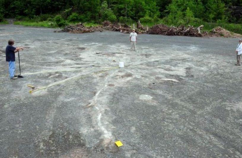 ancien arbre fossile decouverte usa